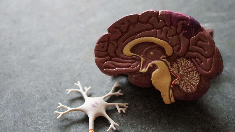 脳は老廃物が出ます